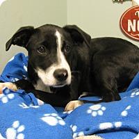 Adopt A Pet :: Reme - Groton, MA