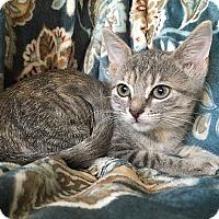 Adopt A Pet :: Jade - Tampa, FL