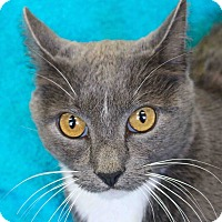 Adopt A Pet :: Melanio - Basehor, KS