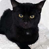 Adopt A Pet :: Pedro - Tiburon, CA