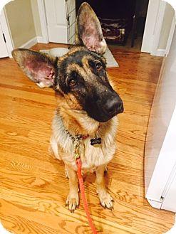 German Shepherd Dog Mix Dog for adoption in Alameda, California - Jingle
