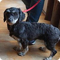 Adopt A Pet :: Holly - Matthews, NC