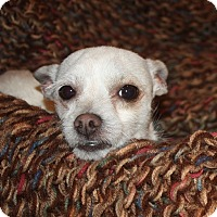 Adopt A Pet :: Spike - Henderson, NV