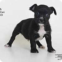 Adopt A Pet :: Birch  (Foster Care) - Baton Rouge, LA