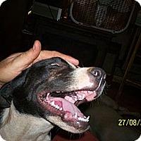 Adopt A Pet :: Spot - Wedowee, AL