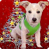 Adopt A Pet :: Gemini smart puppy - Sacramento, CA