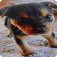 Adopt A Pet :: Roper - San Diego, CA