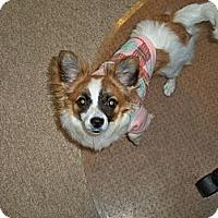 Adopt A Pet :: Gypsy - Lorain, OH