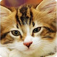 Adopt A Pet :: Vivien Leigh - Scottsdale, AZ
