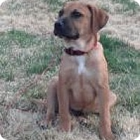 Adopt A Pet :: Baby Cooper - Marlton, NJ