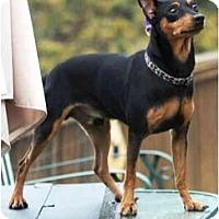 Adopt A Pet :: Joey - Topeka, KS