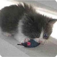 Adopt A Pet :: Deanie - Montreal, QC