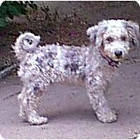 Adopt A Pet :: Jeremiah - dewey, AZ