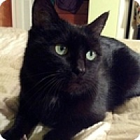 Adopt A Pet :: Polly - Vancouver, BC