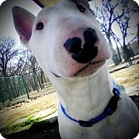 Adopt A Pet :: Bullard - Sachse, TX
