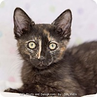 Adopt A Pet :: Angie - Fountain Hills, AZ