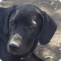 Adopt A Pet :: Rocco AD  01-30-16 - Preston, CT