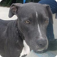 Adopt A Pet :: Bess - Darien, GA