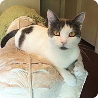 Adopt A Pet :: Bonshell - Austin, TX