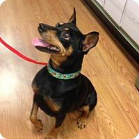 Adopt A Pet :: Tia - Downey, CA