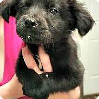 Adopt A Pet :: Teegan - Kimberton, PA