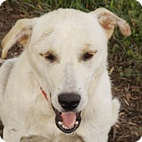 Adopt A Pet :: Mildred - Oxford, MS