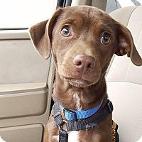 Adopt A Pet :: Buckley - Huntsville, AL