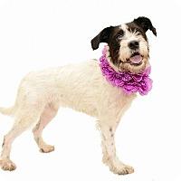 Adopt A Pet :: Daphne - Deltona, FL