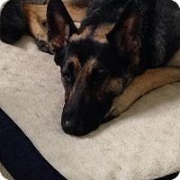 Adopt A Pet :: Sunny - Baltimore, MD