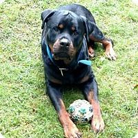 Adopt A Pet :: BLEU - Mason, MI