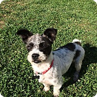 Adopt A Pet :: Burt - New Oxford, PA