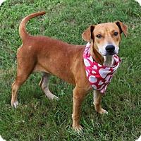 Adopt A Pet :: AUDREY - Houston, TX