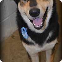 Adopt A Pet :: Ryker - Beaumont, TX