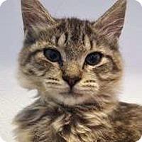 Adopt A Pet :: Jupiter - Prescott, AZ