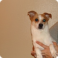 Adopt A Pet :: Lucy - Oviedo, FL