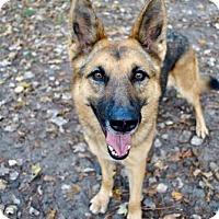 Adopt A Pet :: Liberty - Morrisville, NC