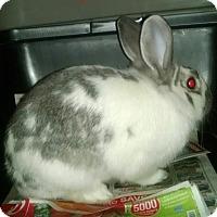Adopt A Pet :: BLUEBELL - Gloucester, VA