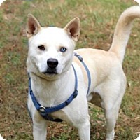 Adopt A Pet :: ZANE - Franklin, TN