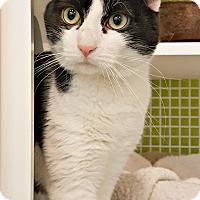 Adopt A Pet :: Virgil - Chesapeake, VA