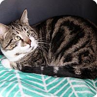 Adopt A Pet :: BRUCE - Newport Beach, CA