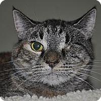 Domestic Shorthair Cat for adoption in La Canada Flintridge, California - Kyia