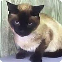 Adopt A Pet :: Sinatra - Dover, OH