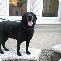 Adopt A Pet :: Emmie - Ft. Lauderdale, FL