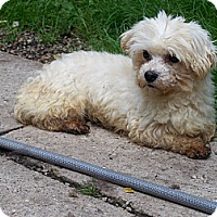 Adopt A Pet :: Princess ADOPTION PENDING!! - Antioch, IL