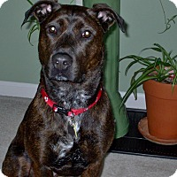 Adopt A Pet :: Bree 2015 (m/c) - Chesterfield, MI