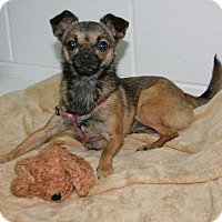 Adopt A Pet :: Sandy - Lufkin, TX