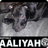 Adopt A Pet :: Aaliyah - Harriman, TN