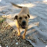 Adopt A Pet :: Bonnie - Manhasset, NY