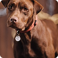 Adopt A Pet :: Kino - Portland, OR