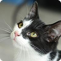 Adopt A Pet :: Conway - Morganton, NC